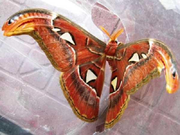 Hiện tượng bướm bay vào nhà sẽ liên quan đến con số nào?