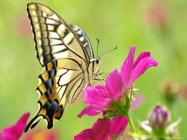 Giải mã hiện tượng bướm bay vào nhà