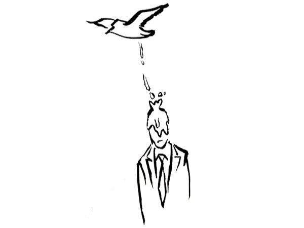 Chim ỉa vào người có điềm báo gì? tốt hay xấu?