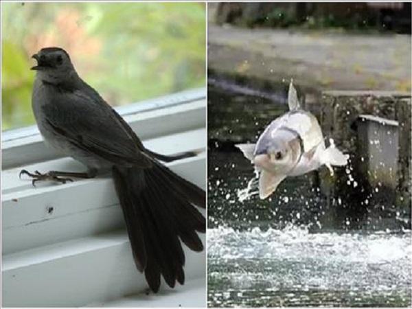 Hiện tượng chim sa cá nhảy điềm gì?