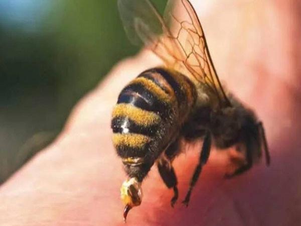 Bị ong đốt có điềm báo gì? đánh con số gì?