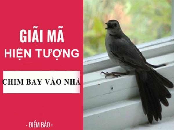 Chim bay vào nhà có điềm báo gì? tốt hay xấu?