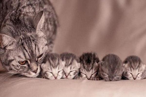 Mơ thấy Mèo liên quan những con số nào