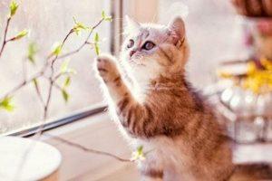 Mơ thấy mèo là điềm báo gì ? Mơ thấy mèo đánh con gì