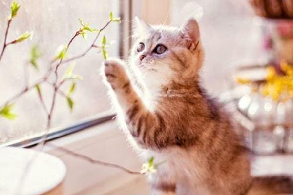 Mơ thấy Mèo là điềm báo gì
