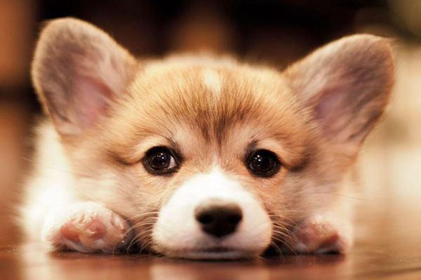 Mơ thấy chó là điềm báo gì