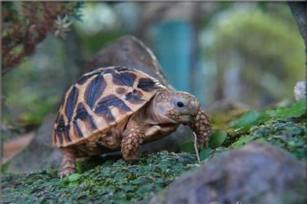 Mơ thấy Rùa là điềm báo gì