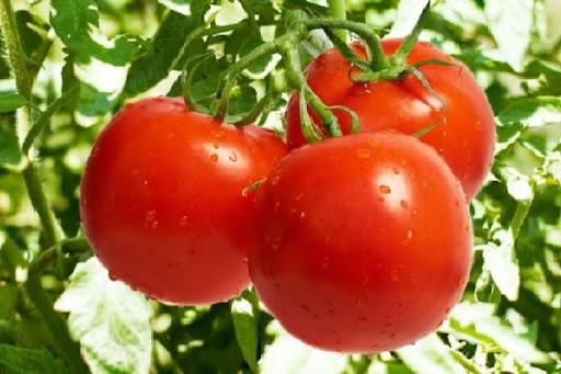 Giải mã giấc mơ thấy cà chua là điềm báo gì
